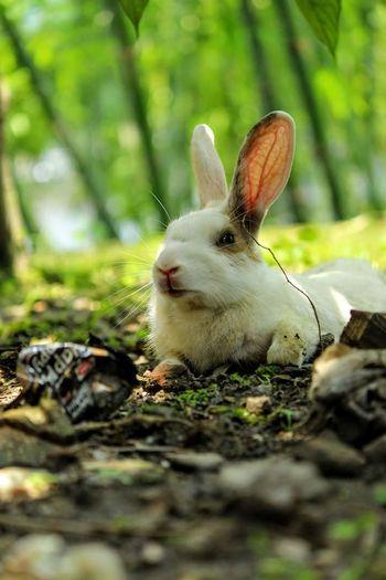Bunny 🐰 Pet