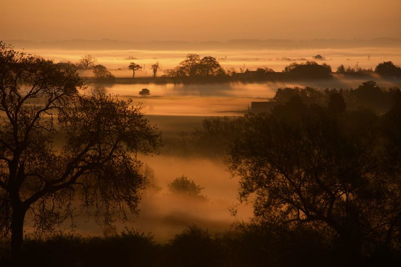 Morning misty walk Farm Farm Life Fieldscape Misty Orange Sky Silhouette Silouette & Sky Sky Light Sunrise Silhouette Trees Beauty In Nature Countryside Uk Countryside Landscape Countryside Uk Cows Field, Green, Nature, Landscape, Background, City, Outside, Rice, Chiangmai, Plant, Outdoor, Agriculture, Farm, Blue, Countryside, Village, Thailand, Sky, Summer, Food, Natural, Bright, Travel, Grassy, Environment Misty Morning Plant Shropshire Countryside Silence Sky Sunrise Sunrise And Mist, Tree
