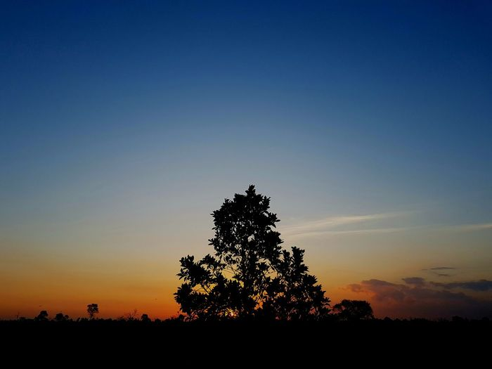 Silhouette trees against clear sky during sunset