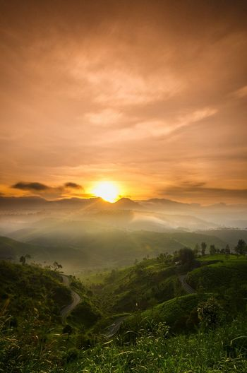 Sunahine Sunshine Natgeotravel Wonderful Indonesia Westjavaindonesia Pesonaindonesia Nikonphotography Sunrise_Collection #Nature  Travel Destinations EyeEm Selects Nikon Sunrise Tree Tea Crop Beauty Dawn Horizon Fog Summer Gold Colored Moody Sky Cloudscape Romantic Sky