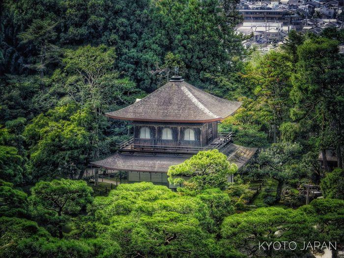 Architecture Tree Built Structure Growth Green Color No People WoodLand Lush Foliage Tourism Kyoto,japan Nikon D3100