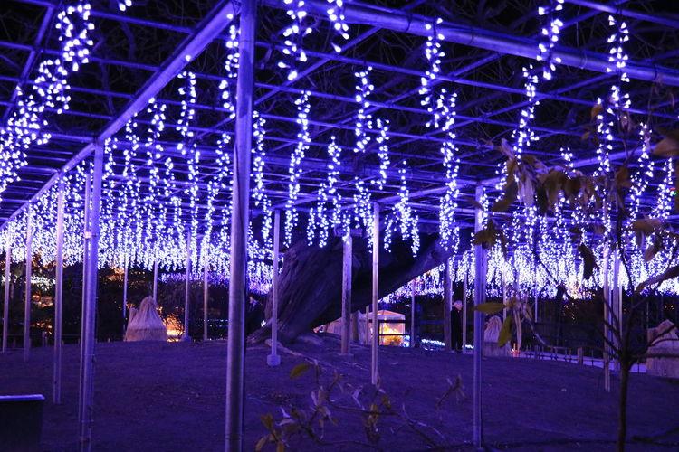 Asikaga Flower Park Illuminations Wisteria Trellis