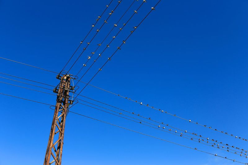 Abschied Vom Sommer Sommerende Schwalben Birds Uckermark Low Angle View Blue Sky Clear Sky Technology Nature Electricity  Day No People Power Supply Outdoors Metal Cable