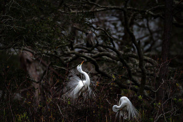 Plant Bird Animals In The Wild Vertebrate Land Animal Animal Themes Animal Wildlife Tree No People Nature Focus On Foreground Forest Day Field White Color Growth One Animal Egret Outdoors