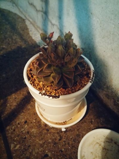 벨루스 Plants 🌱