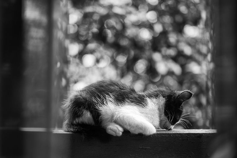 Streetphotography Pets Streetphoto Black And White Cat Light And Shadow Popular Photos Streetphoto_bw Monochrome Blackandwhite Today's Hot Look