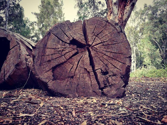Tree log (Huawei p9) Tree Log Tree Close-up Sky