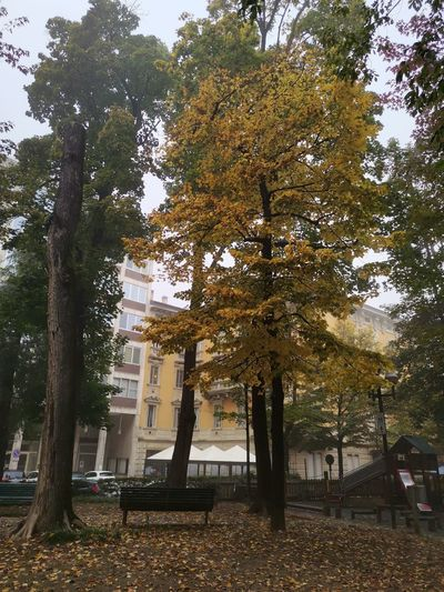 Trees and plants in park during autumn