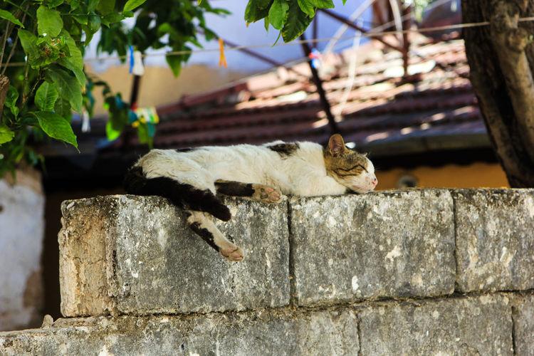 Cat Sleeping On Stone Wall