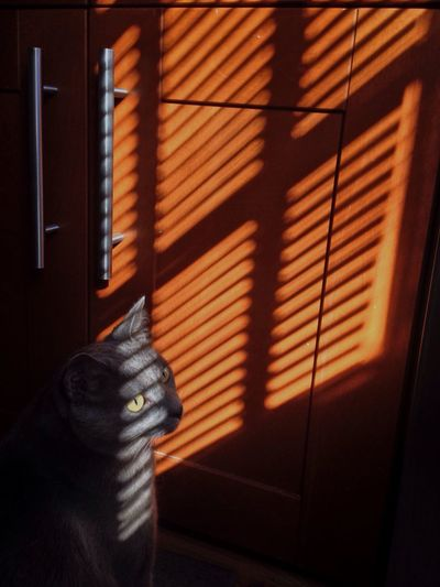Cat against cabinet at home