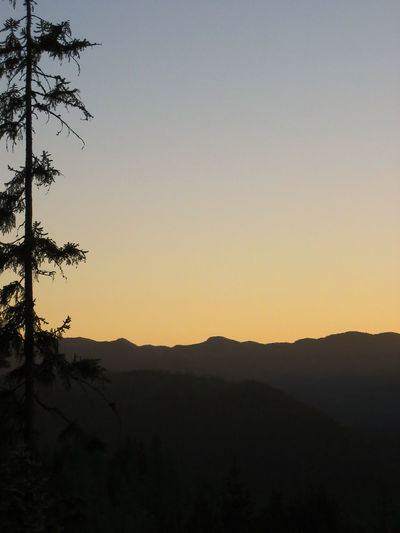 Silhouette of a fir-tree and mountains with lots of copy-space in the clear sky Beginnings Coniferous Copy-space Early Freedom Harmony Hope Journey Peaceful Sunset Camping Clear Sky Dream Morning Quiet Recreation  Twilight Background Dawn Dusk Fir-tree Glow Horizon Silence Sunrise