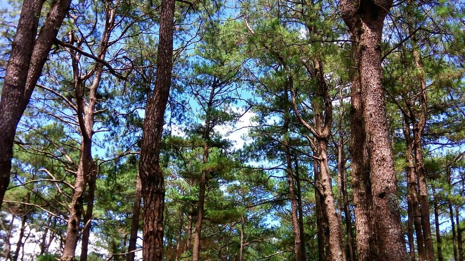 Nature Photography Grass Branches Branches And Sky Nature Forest Trees Trees Collection Forest Photography Tall Trees Talltrees trees and nature be a part of the nature.