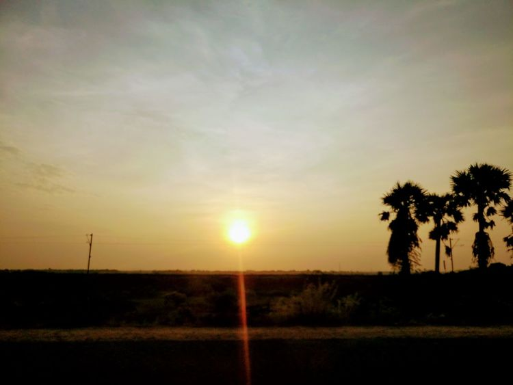 Tree Sunset Beauty In Nature Scenics No People Nature Tranquility Landscape Outdoors Rural Scene Sky Palm Tree Day