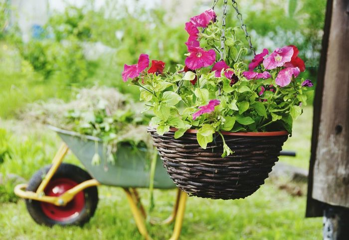 Outdoors Day Nature Growth No People Community Garden Cantry Home Showcase Interior Vase Beauty In Nature Plant Greenhouse Red Flower Transportation Flower Nature Herb Cantryside Wood - Material