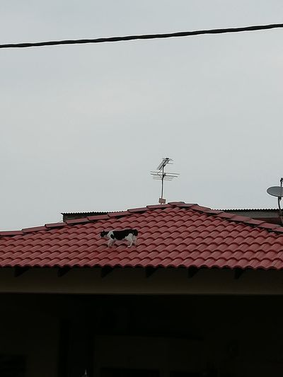 Roof Technology