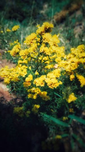 Tomb Sweeping Day Climb Up! Road Side Flower Collection Yellow Flowers Color Of Life Smartphone Photos Original Experiences Hot Day Hahahaha 😂😂😂😂😂 Summer ☀