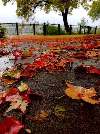 Autumn Tree Plant Plant Part Leaf Nature Change No People Day Outdoors Park Wet
