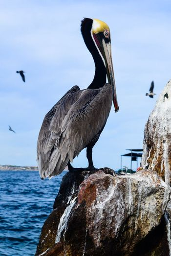 Close-up of gray heron perching on shore against sky