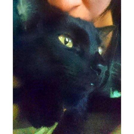 Miss green eyes Topcatphoto Bestcats_oftheworld Bestmeow Beautiful Catoftheday Excellentcats Meow_beauties Meowbox Cats Catlovers Catsofinstagram Kittensofinstagram Kitten All_shots Like4like Picoftheday Photooftheday Eyes Greeneyes