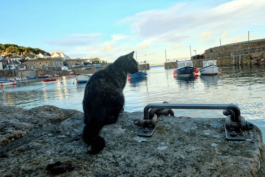Sky One Animal Water Outdoors Animal Themes Mammal Day No People Cat Cornwall Harbour Life Boats Relaxing Reflections Pets Sea And Sky View From My Point Of View Landscape United Kingdom Blue Sky Bay Black Cat Local Blue