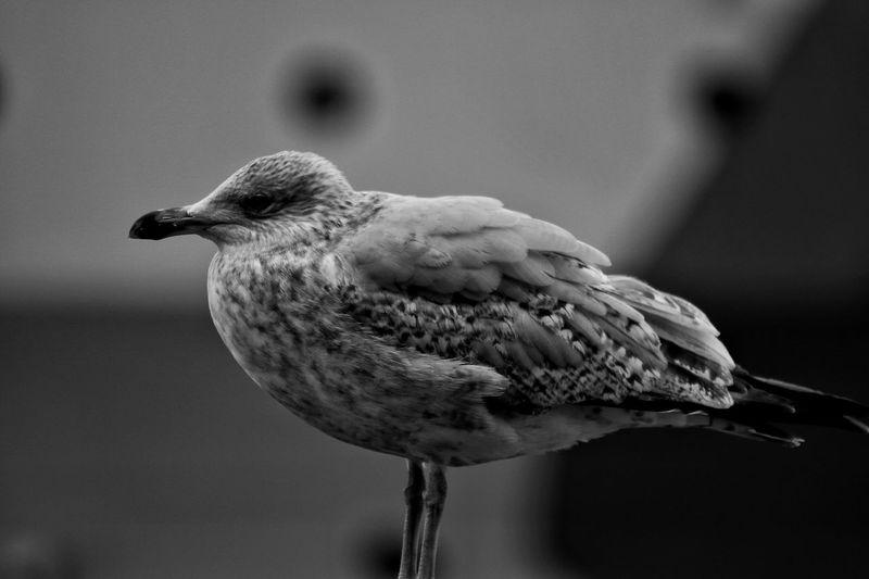 Bird Bird One Animal Animal Themes Animals In The Wild Focus On Foreground Animal Wildlife Close-up No People Nature Outdoors