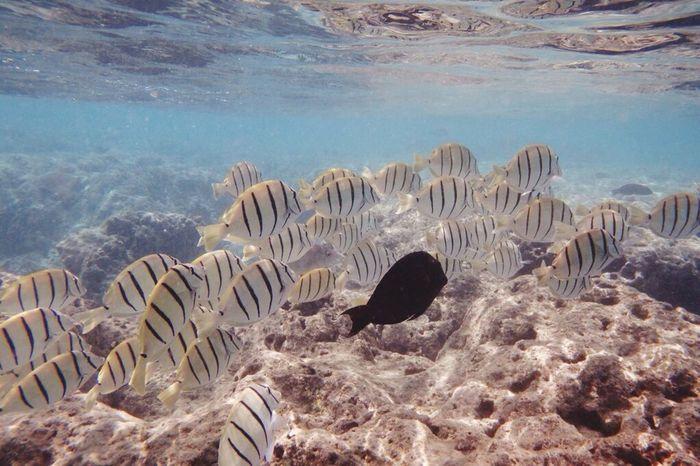 Hawaii Hanaumabay Fish Snorkeling Sea 😎🐠🌴🌊
