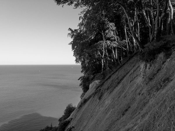 Evening at Moens Klint Sea Horizon Over Water Water Nature Scenics Beauty In Nature Tranquility Tranquil Scene Clear Sky Tree Outdoors Moensklint Danmark Beauty Place Danmark Natur Bnwphotography Blackandwhite Photography No People EyeEmNewHere