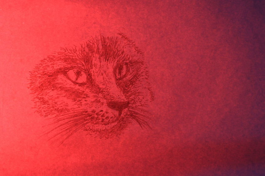 The face of cat wrote by pencil on white paper in red light Diamond Eyes  Rat Textures Black And White Cat Close-up Cute Day Drawing Face Fur Ideas Indoors  Lazy Animal Long Mustache Long Tail Nature No People Paper Pencil Drawing Pet Portrait Red Tabby Cat Texture