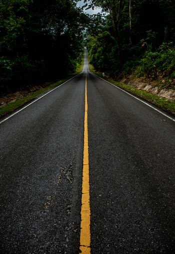 Surface level of empty road in forest
