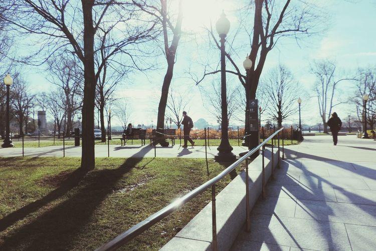Park Washington Sun Light Trees Nature City USA Downtown Travel