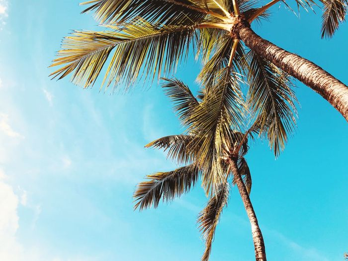 Coconut trees Low Angle View Sky Tree Nature Plant No People Day Growth Blue Beauty In Nature Palm Tree Cloud - Sky Tropical Climate Outdoors Tranquility Tall - High Coconut Palm Tree Leaf Sunlight Tree Trunk