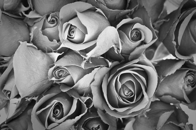 Monochrome rose Flower Rose - Flower Petal Fragility Nature Flower Head Beauty In Nature Full Frame Backgrounds Bouquet No People Love Rose Petals Freshness Celebration Pedal Plant Gift Close-up Indoors