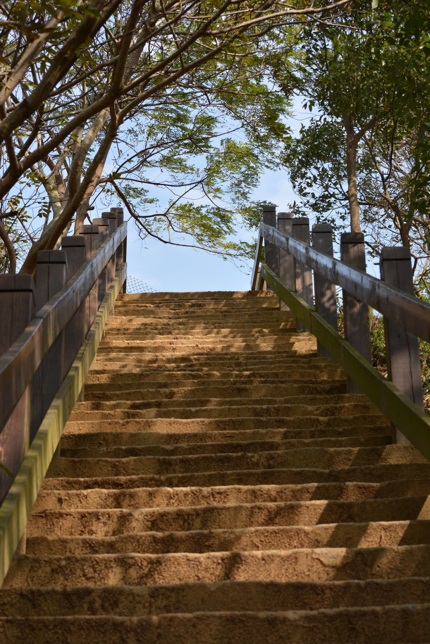 steps and staircases, steps, built structure, staircase, architecture, tree, railing, day, building exterior, the way forward, outdoors, low angle view, no people, sky, nature