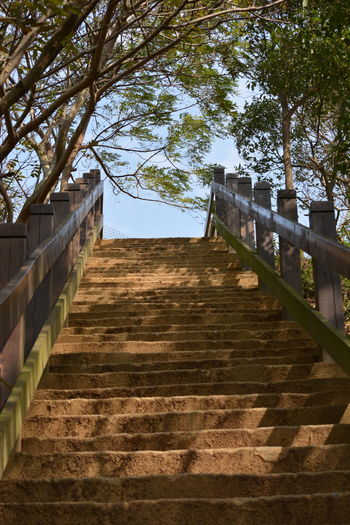 Day Elevated Walkway Nature No People Outdoors Railing Sky Staircase Stairs Surrounded By Trees Steps Steps And Staircases Steps Leading Up The Way Forward Tree