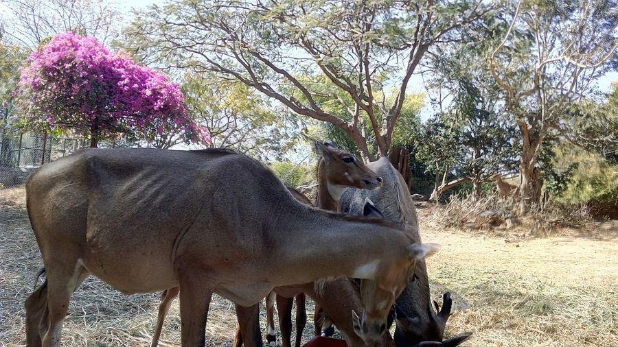 Animals Neel Gavi