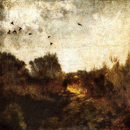 #Snapseed #disressedfx #tinyshutter #sky #landscape #mobitog #autopaint #paint #art #brooklands #byfleet #surrey # Art Sky Landscape Paint Brooklands Surrey Snapseed Mobitog Tinyshutter Byfleet Disressedfx Autopaint
