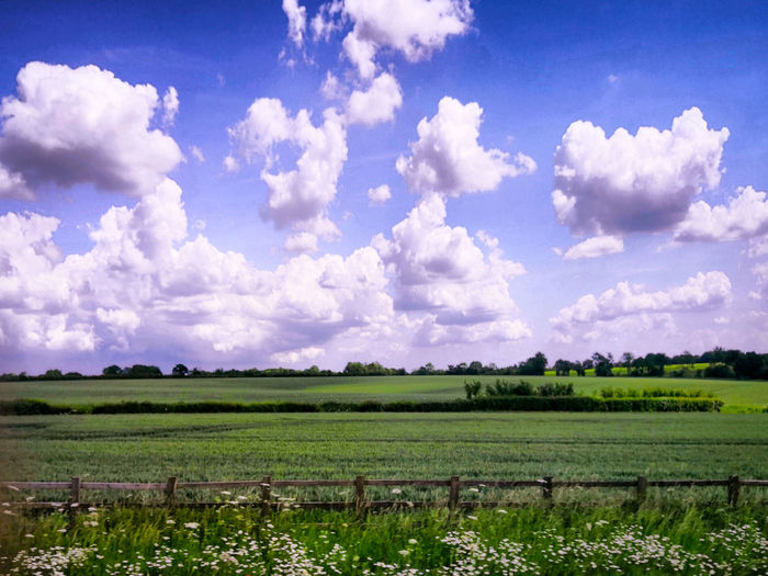 Rural area Rural Scene Tree Agriculture Vine - Plant Field Crop  Vineyard Farm Sky Cultivated Land Agricultural Field