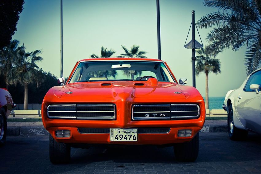 The Judge GTO Pontiac PONTIACGTO Palm Tree Car Transportation Tree Mode Of Transport Day Land Vehicle