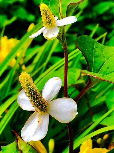 Plant Growth Beauty In Nature Flower Freshness Flowering Plant Fragility Vulnerability  Close-up Flower Head Petal No People Nature Day Outdoors Plant Part Pollen