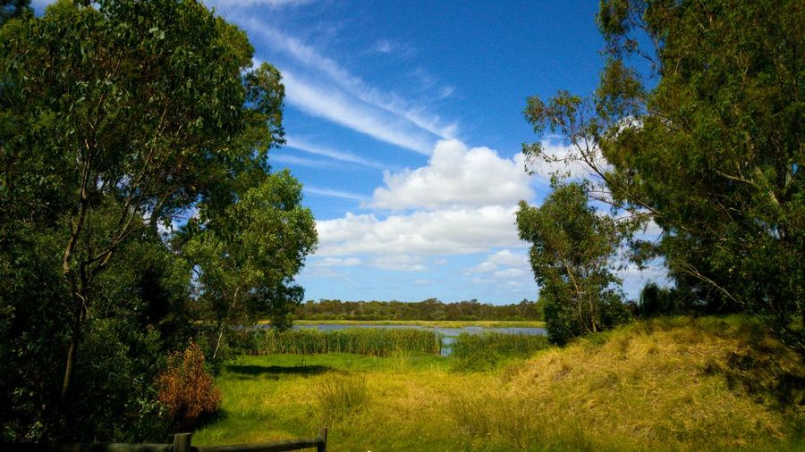 Tranquil Scenery Australian Weather Beautiful Day Sunny Swamp Bibra Lake Western Australia Treescape Nature Serenity Meditation Place Open Space Perth Perth Australia Tree Vapor Trail Rural Scene Agriculture Blue Sky Landscape Cloud - Sky