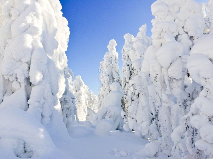 Снежные одеяла. Winter White Color Snow Nature Cold Temperature No People Day Sky Weather Sunlight Snowing Frozen Nature Winter