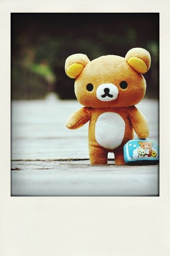hello teddy! Travel Cute Teddybear Ontravel