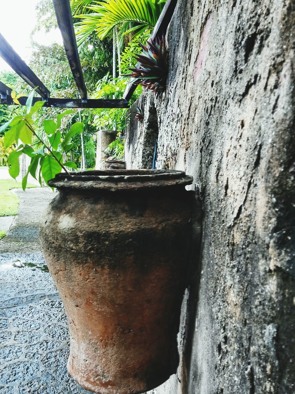 growth, day, no people, outdoors, plant, built structure, nature, close-up, architecture, beauty in nature