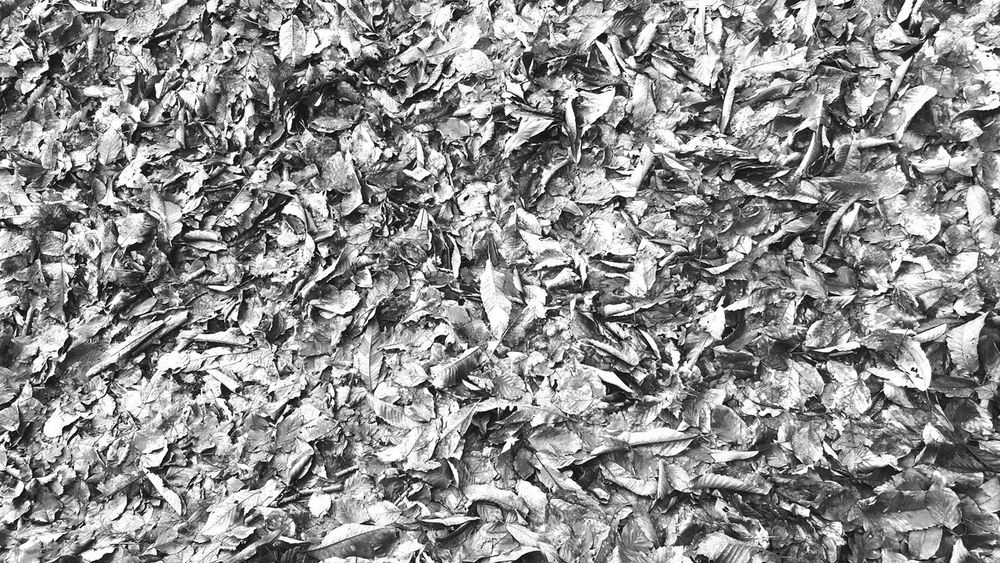 Leaves Black And White Photography Textures And Surfaces Winter Autumn Leaves Autumn Collection Depth Scrunch Rustle TakeoverContrast Perspectives On Nature