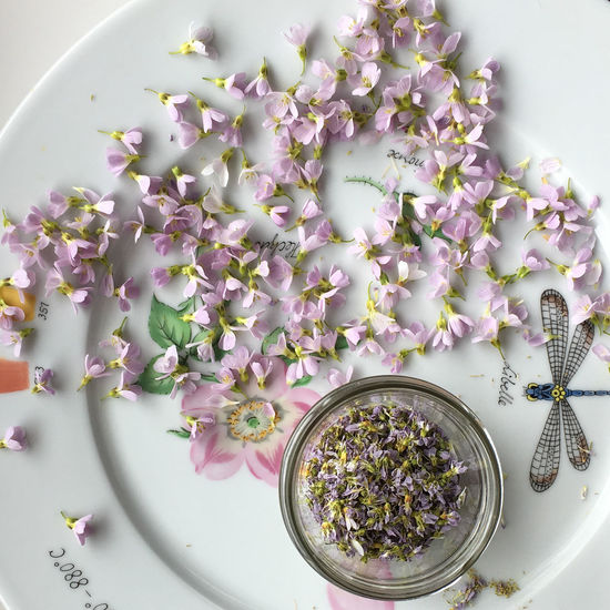 Close-up Cuckooflower Day Dried Flowers Flower Flower Head Fragility Freshness Healthy Eating High Angle View Indoors  Nature No People Wild Herbs