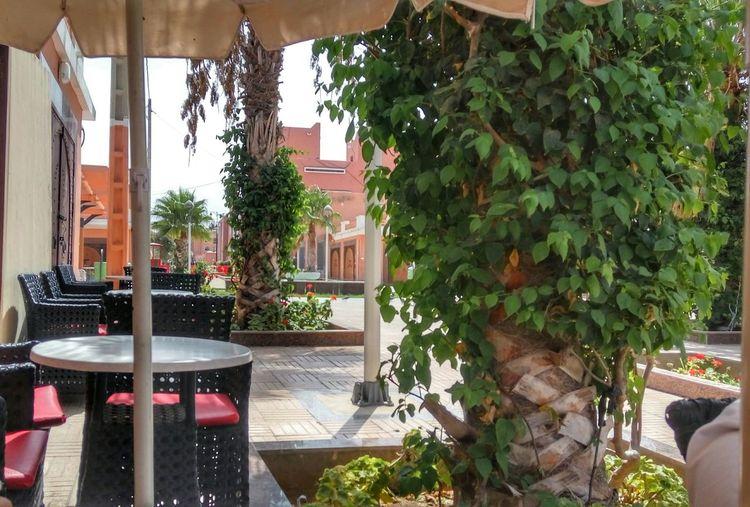 Tree Architecture Plant Leaf Cafe Garden Laayoune El Aaiún Sahara