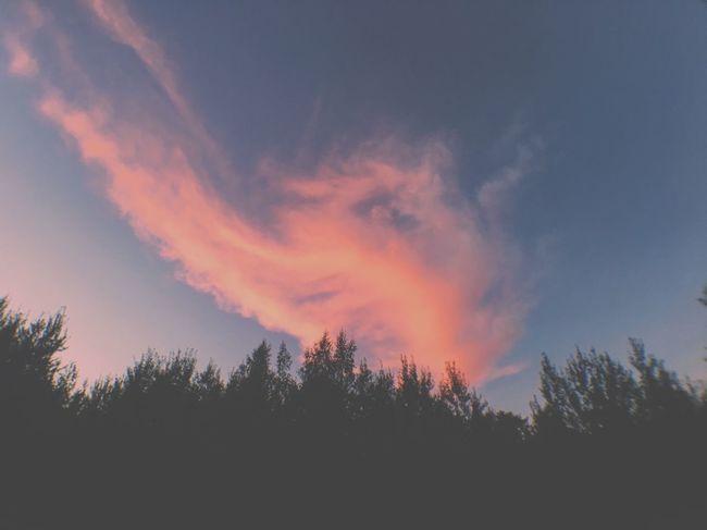 Sunset Sky Cloud - Sky Cloud Tree Beauty In Nature First Eyeem Photo
