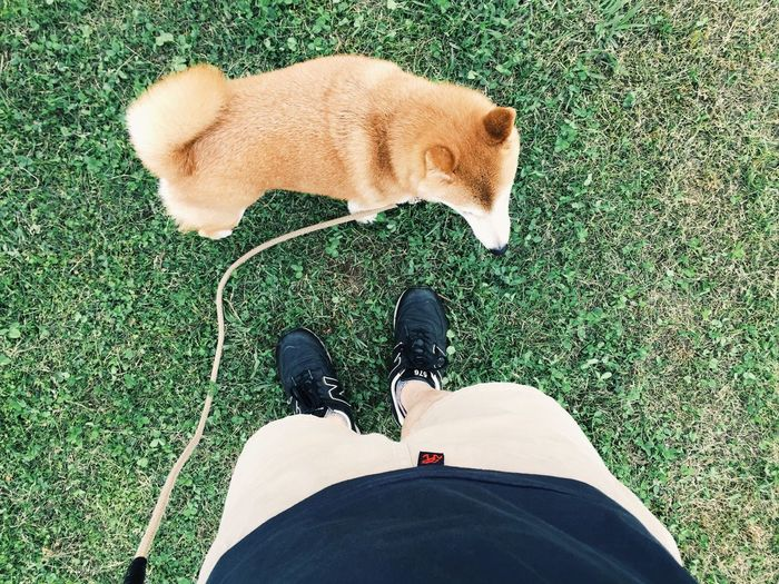 My Dog Dog Shibainu 柴犬 NewBalance 576