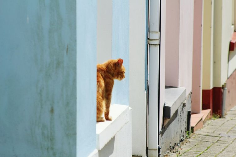 Dog looking at door