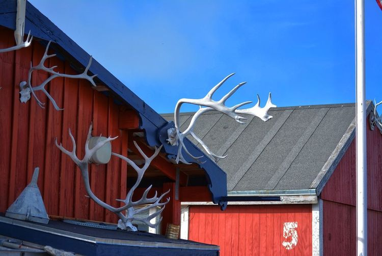 Ilulissat, Greenland, July | midnight sun | impressions of Jakobshavn | antlers and horns of a reindeer hanging on the wall of a red house Day Outdoors Greenland Ilulissat Impression Scenery Built Structure Architecture Building Exterior Building Sky Roof No People Low Angle View Animal Representation Art And Craft Antler Horns Reindeer Caribou Scene House Design Clear Sky Five